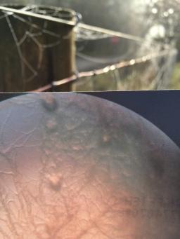 cobweb-fence-bacillass