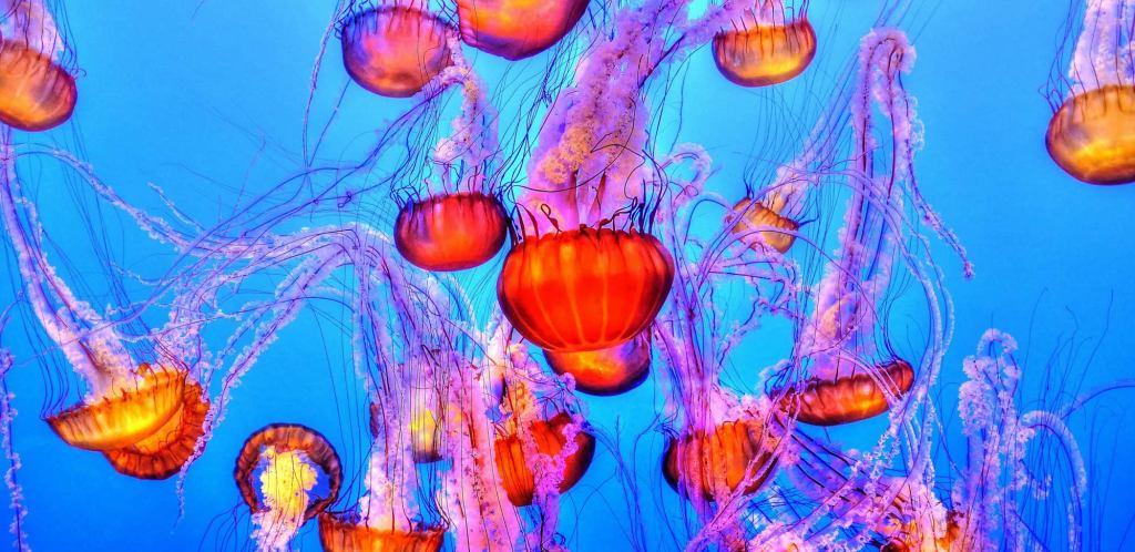 jellyfish-931714